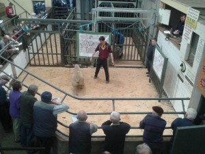 Sale Report – Sheep Ireland Multibreed €uroStar sale 2014