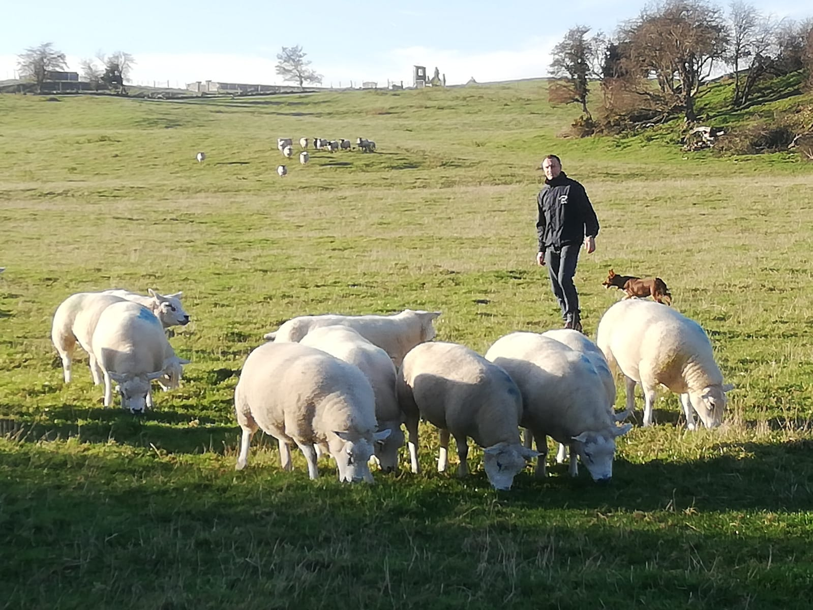 'Every year, you must produce the best lambs possible, and performance recording helps to do this'