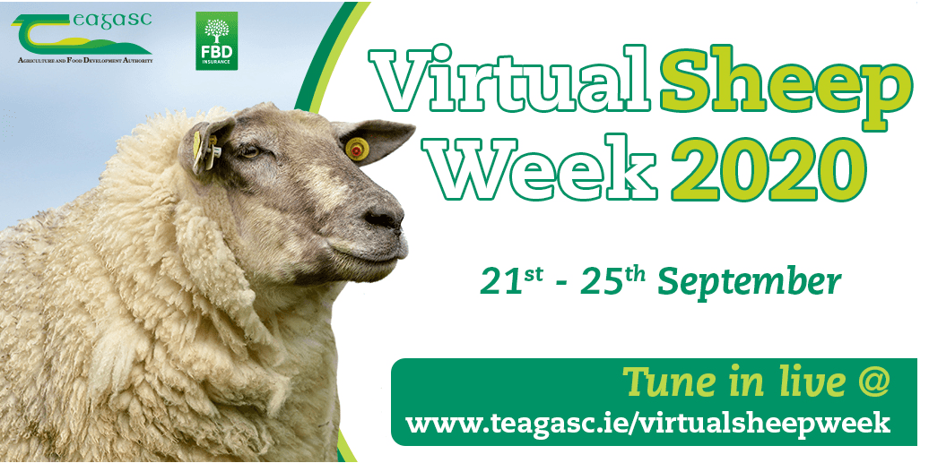 Don't Forget! Teagasc Virtual Sheep Week 2020 Starts this Mon 21st Sept!
